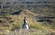 Lady on white Arabian