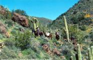 Pack trip Seven Springs